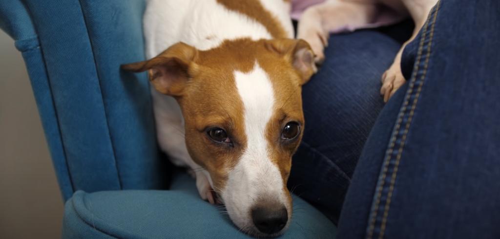 Effektive Mittel gegen Langweile für Hunde