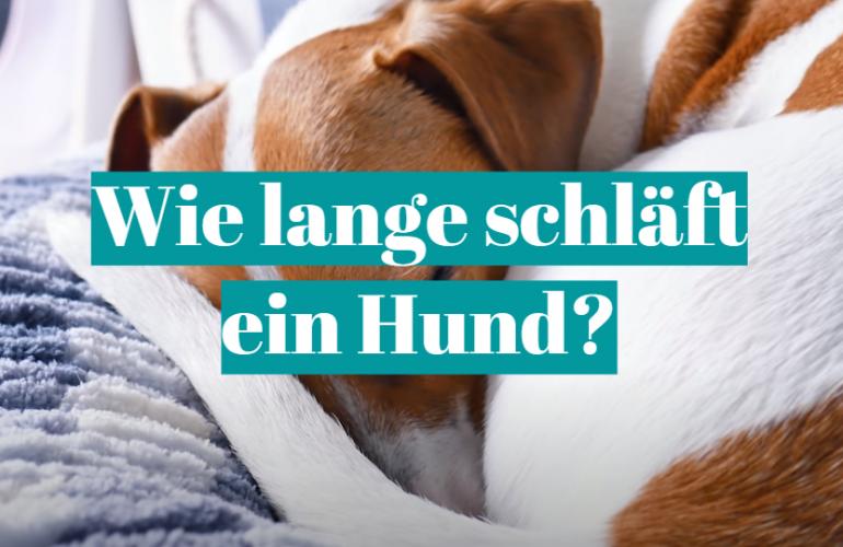 Wie lange schläft ein Hund?