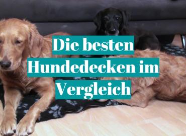 Die besten Hundedecken im Vergleich