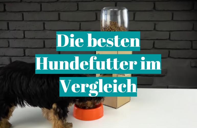 Hundefutter Test 2021: Die besten 5 Hundefutter im Vergleich