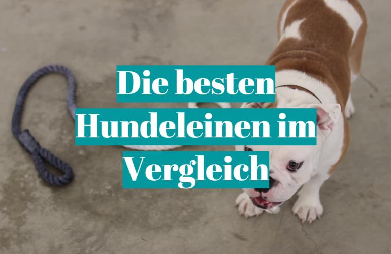 Hundeleine Test 2021: Die besten 5 Hundeleinen im Vergleich