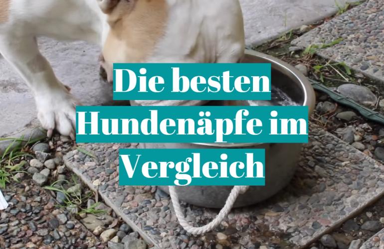 Hundenapf Test 2021: Die besten 5 Hundenäpfe im Vergleich