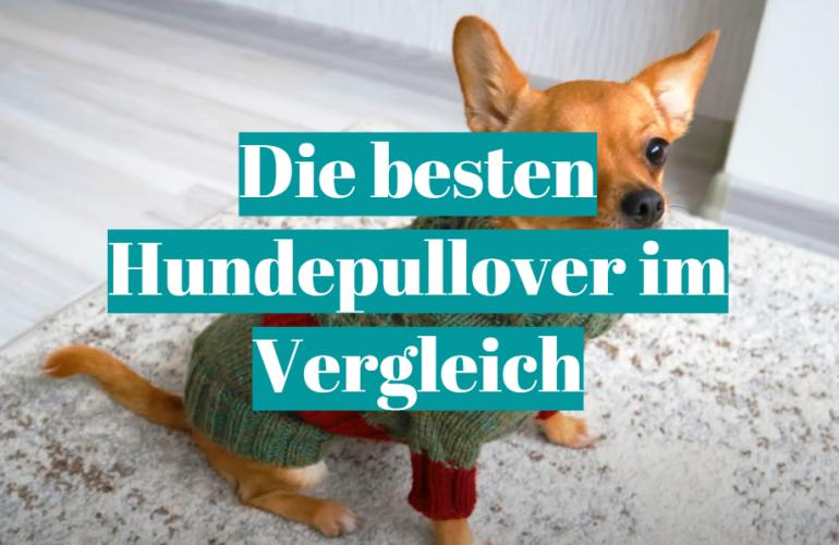 Hundepullover Test 2021: Die besten 5 Hundepullover im Vergleich