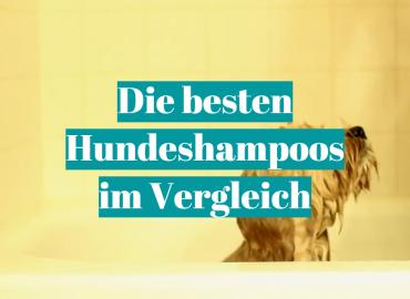 Die besten Hundeshampoos im Vergleich