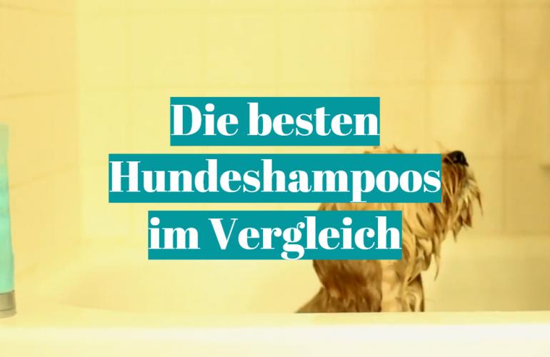 Hundeshampoo Test 2021: Die besten 5 Hundeshampoos im Vergleich