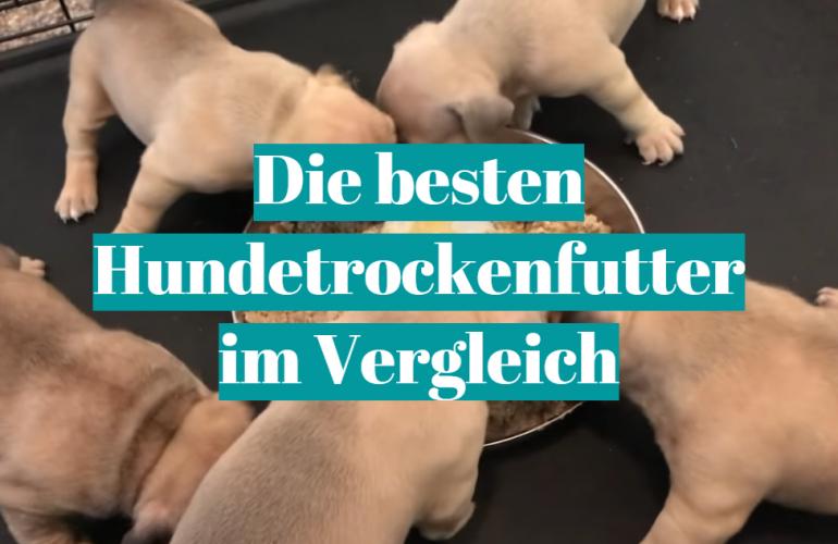 Hundetrockenfutter Test 2021: Die besten 5 Hundetrockenfutter im Vergleich
