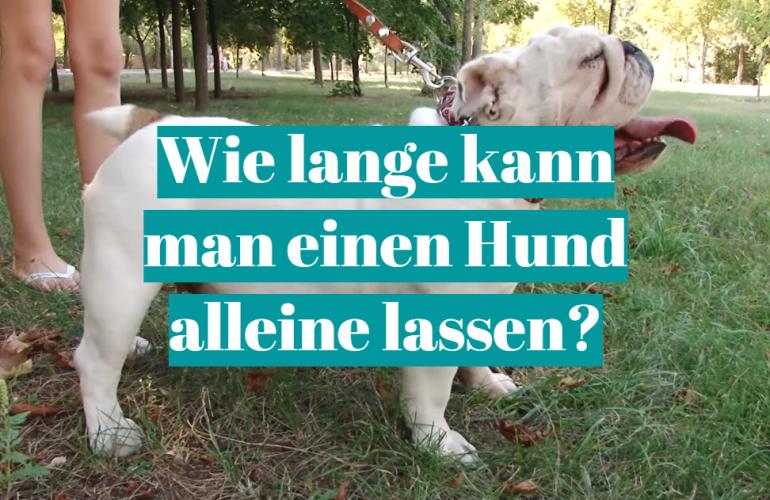 Wie lange kann man einen Hund alleine lassen?