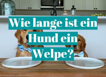 Wie lange ist ein Hund ein Welpe?